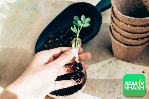 Nông học có dễ xin việc không?